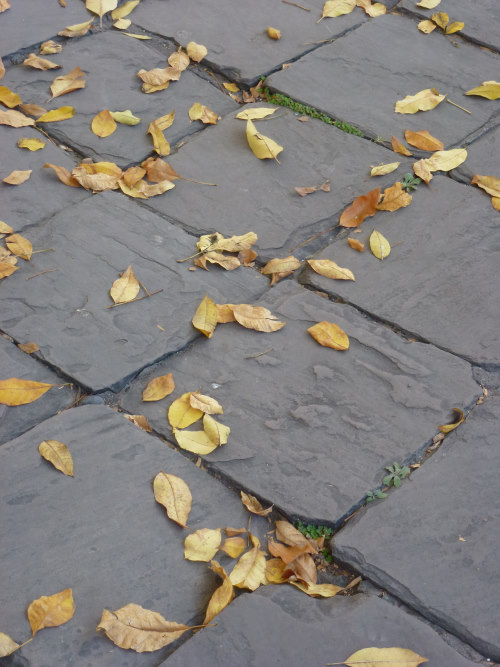 fall leaves on paver stones by Val Daigen