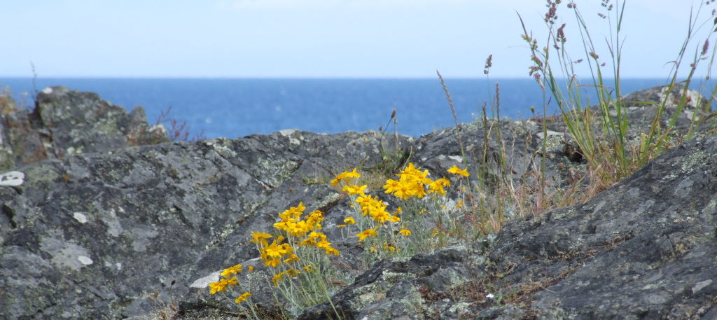 yellow flowers poking out of rocky landscape by Val Daigen